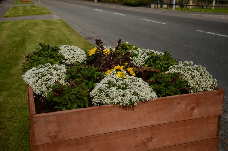 Kiltimagh road planters MAY_6584