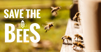 Save The Bees – Plant These