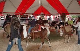 pony rides 1