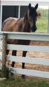 Swingin' D Horse Rescue - Elvis