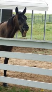 Horse Adoption Success - Elvis