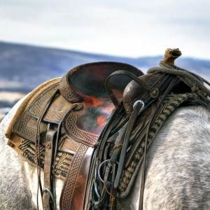 Horse Tack and Gear