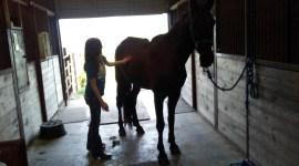 volunteer grooming horse