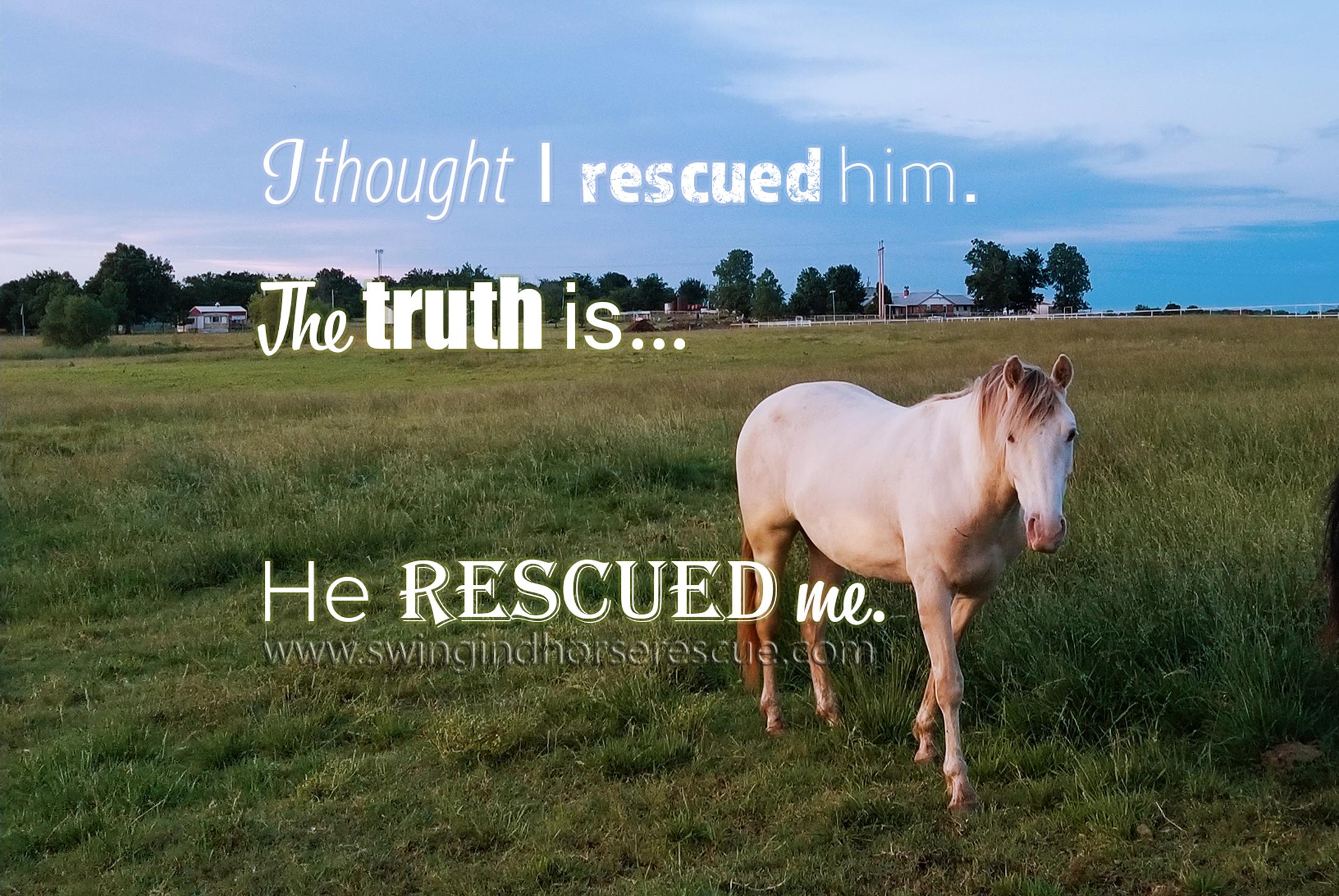 Winston at Swingin' D Horse Rescue
