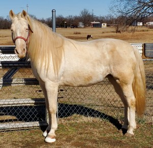 Image of Anastasia, the beautiful horse we saved from slaughter.