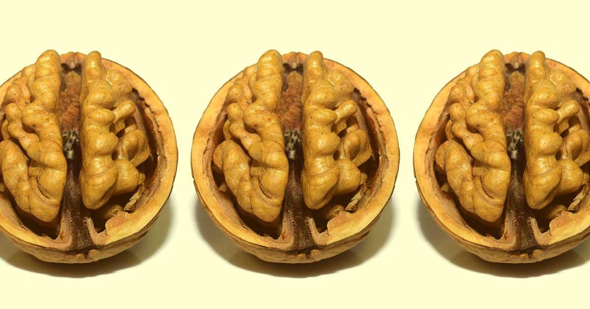 3つの脳 爬虫類脳・哺乳類脳・人間脳