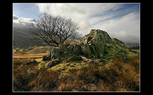 Ron Davies - Ron Davies Capel Curig Tree