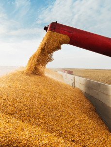 AGRICULTURE & FERTILISERS