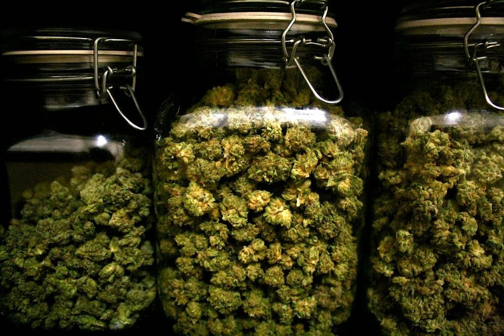 Storage Cannabis Flowers SwissBreeders CBD THC