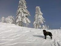Zora enjoying the snow