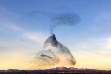 スペインの上空で鳥の群れが描き出す光景、さまざまに変化する模様が美しい