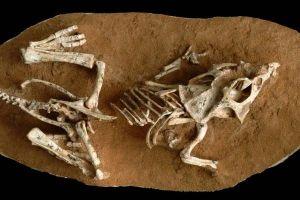 絶滅の一因か?恐竜の卵が孵化するまでの期間は予想以上に長いことが判明