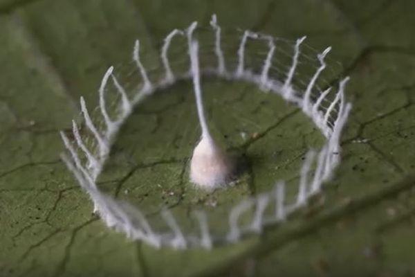 ストーンヘンジのような奇妙な構造物、中からクモの子供が誕生する瞬間が撮影される