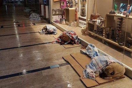 記録的寒波から飼い主のいない犬や猫を守るため…トルコの人々の取り組みが暖かい