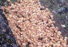 生まれたばかりのヒナ、1000羽以上が捨てられているのが英で発見される