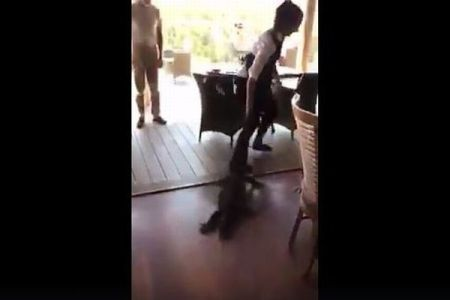 レストランに突然侵入してきたトカゲ、その尻尾を素手でつかみ追い出す女性がスゴイ