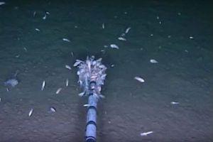 1970年代に禁止された化学物質が、海溝の最深部に住む生物から高濃度で検出される