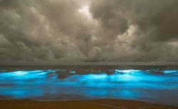 豪の海辺が突然神秘の色に…一面に広がる夜光虫の青い光が美しい