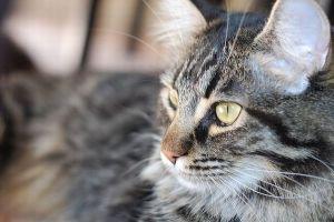 眠っている間に一酸化炭素が家に充満、飼い猫が夫婦を起こし危機を救う