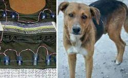 ナイジェリアの結婚式会場で自爆テロ、警備犬が自らを犠牲にして人々を救う