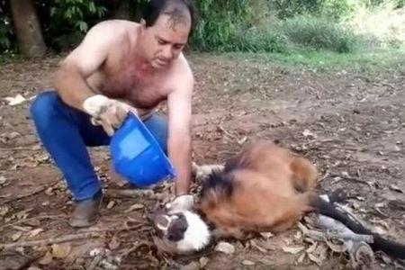 消耗しきった野生のオオカミに、男性が水を与え無事に森へ帰す
