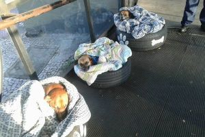 冬を迎えたブラジル、バス会社による子犬のための取り組みが暖かい
