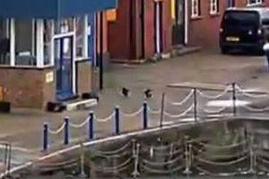 喧嘩で海に落ちてしまったネコ、素早く救った男性がナイスプレー