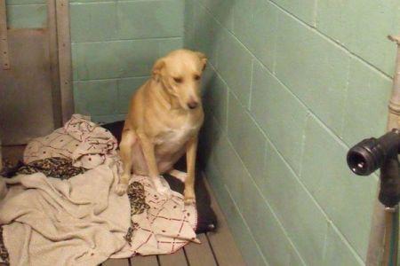 「世界で最も寂しい犬」と呼ばれたワンコ、2度も里親に捨てられ殺処分の日が迫る