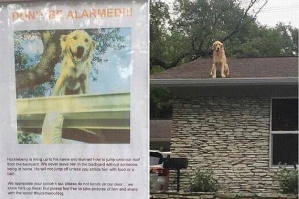 屋根に上るのが大好きなワンコ、その飼い主のメッセージもユニーク