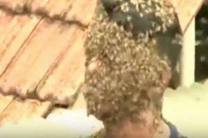 ミツバチをこよなく愛する男性、数千匹に顔を覆われてもケガはなし