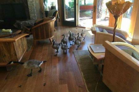 まさか…家の中を鳥の親子がお散歩、並んで通り抜けていく