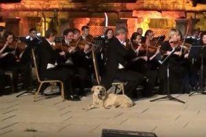 クラッシックの野外コンサートに突然ワンコが登場、あくびをして観客の笑いを誘う