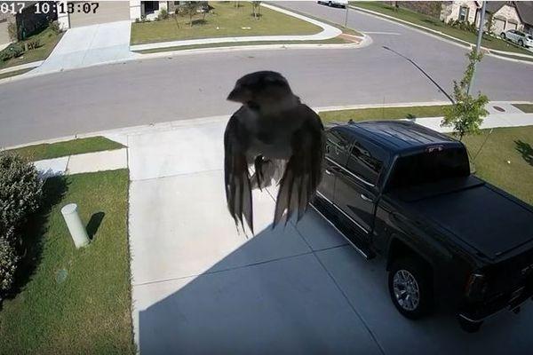 鳥の浮遊霊か?翼を動かさずに飛ぶスズメの動画が話題に