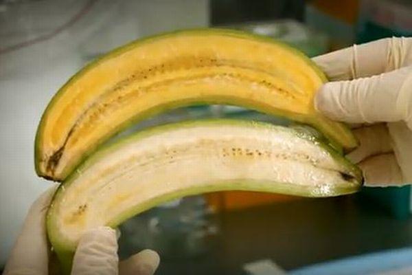 アフリカの子供たちを救うため、豪の研究者がビタミンAの豊富な「スーパーバナナ」を開発