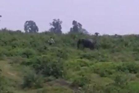 突然野生のゾウが暴れだし、一緒に写真を撮ろうとした男性が踏まれて死亡【動画】