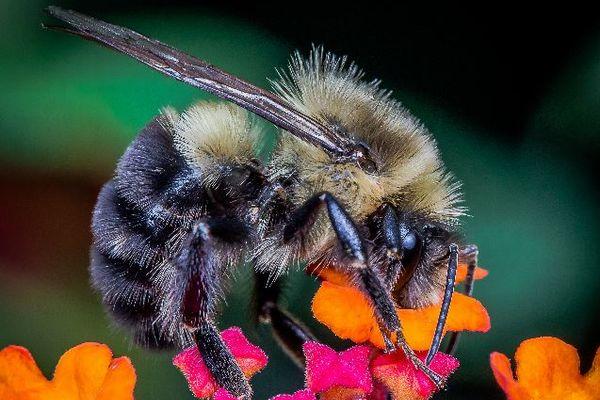 新たな研究により、ミツバチだけを殺さない殺虫剤の開発が現実へ