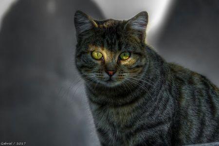 熊本で起きた殺人未遂事件、犯人は近所の野良猫?爪から血液反応