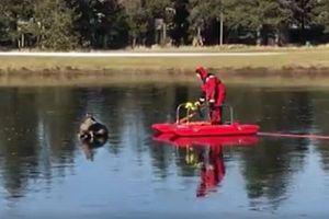 氷の池でシカが立ち往生、助けに来た消防隊員に懐いてしまう救出劇がユニーク