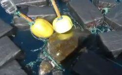 ウミガメが60億円相当のコカインに絡まり、米国沿岸警備艇に救助される