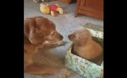 仲間を失ったワンコ、新しい子犬を紹介され大喜びする姿が可愛い