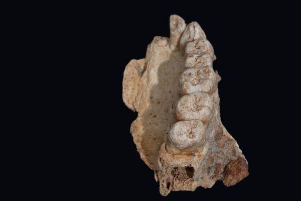 イスラエルで発見された顎の化石、17万年前には人類がアフリカから移住か
