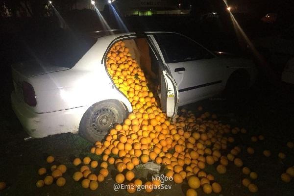 重さは約4トン!車内から大量の盗まれたオレンジが発見される