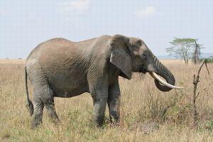 アフリカでの野生動物の密猟を防ぐため、イギリス軍が派遣されることに