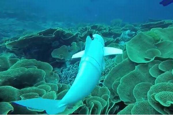 尾ビレを動かし魚ソックリ!米大学が開発した水中ロボットがユニーク