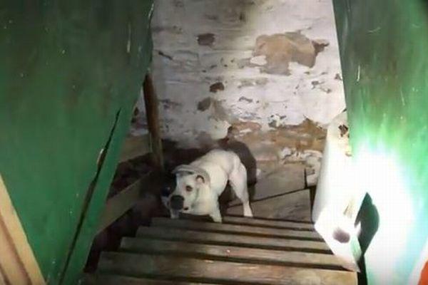 購入した家の地下室を覗いたらワンコを発見、保護団体に無事救助される
