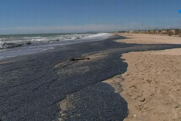 フランスで人気のビーチに大量のクラゲが出現、その異様な光景が衝撃的