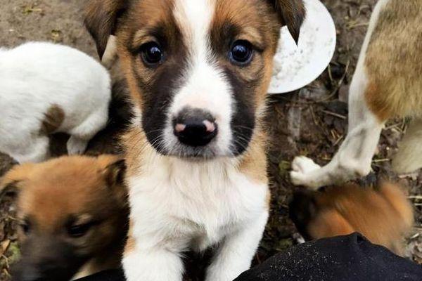 チェルノブイリ原発付近で暮らす子犬たちが、米の家庭に引き取られることに