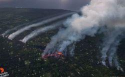 溶岩が流れるハワイ島で行方不明になった犬たち、10日ぶりに救助される