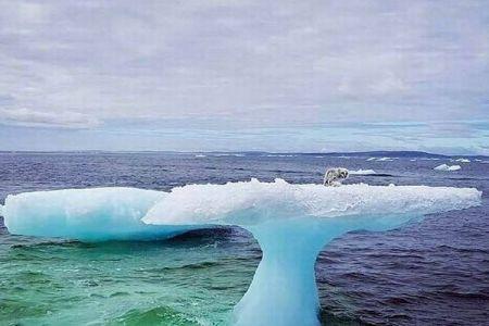 沖合の氷に残され漂流していた北極ギツネ、偶然発見した漁師に救出される