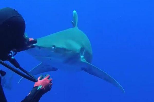 獰猛なサメの口から釣り針を抜いてあげる、イギリス人女性ダイバーがすごい